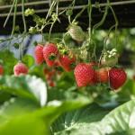 5 tavaszi zsírégető étel, ami megszabadít a kilóktól!